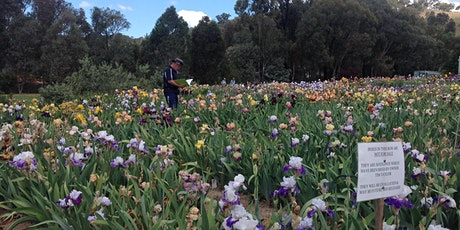 Riversdale Irises - Iris in bloom tickets