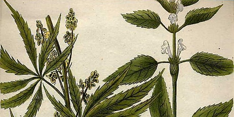 Cannabis, It's just a plant: What can archeology tell us about cannabis? tickets