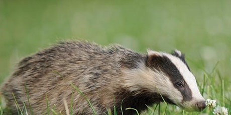 Badgers Of Surrey tickets