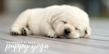 Puppy Yoga with SCARS - 1pm Session tickets