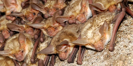 Bat Conservation in the Gorge tickets