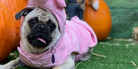 """""""Halloween Pawty"""" at Camp Bow Wow New Orleans tickets"""
