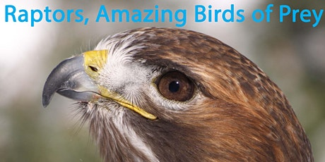 Raptors, Amazing Birds of Prey! tickets
