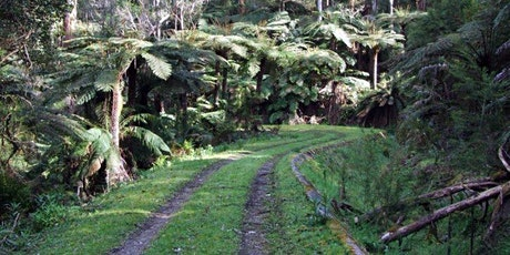 O'Shannsssy Aquaduct to Redwood Forest 18km Hike on the 28th of Nov, 2020