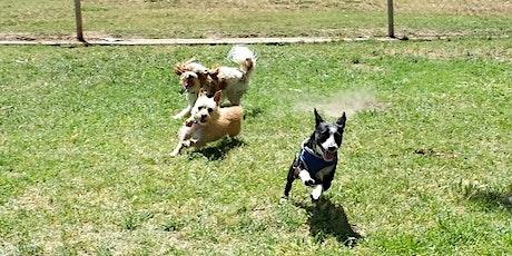 Small Dog Social tickets