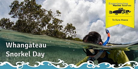 Whangateau Snorkel Day tickets
