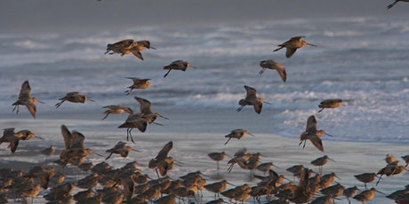Down For the Count: Exploring Bird Diversity and Abundance at Point Reyes tickets