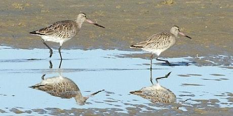 Welcome Back Shorebirds tickets
