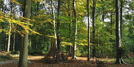 Bosbaden / Forest Bathing Berg en Dal, Nijmegen tickets