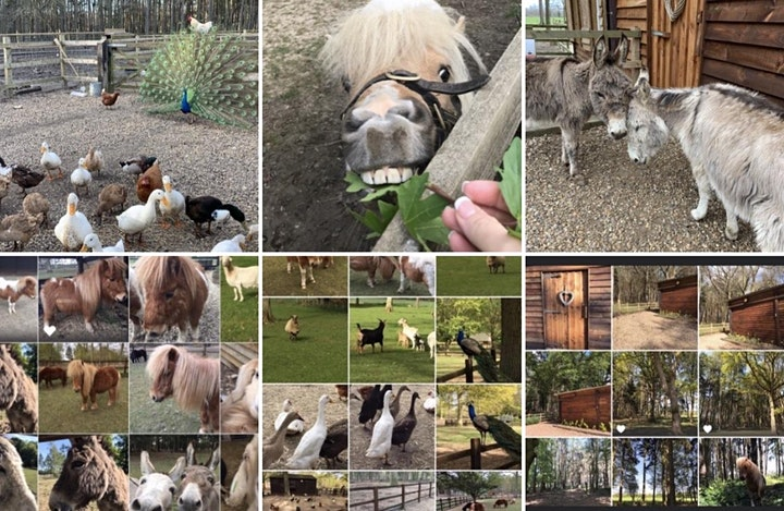 Easter  Fun on the Farm at Summer Barn - Private Hire - 12 April - 3 May image