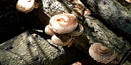 Mushroom Workshop - Part II! tickets