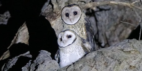 Owl Friendly Margaret River - Locals caring for local wildlife tickets