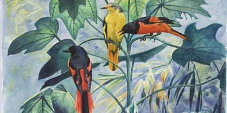 The evolution of passerine birds explained tickets