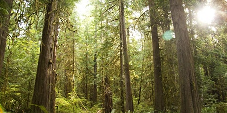 Olympic National Park Small Group Tour tickets