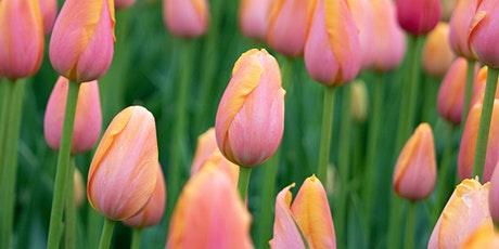 Spring Flowering Bulbs for Your Garden tickets