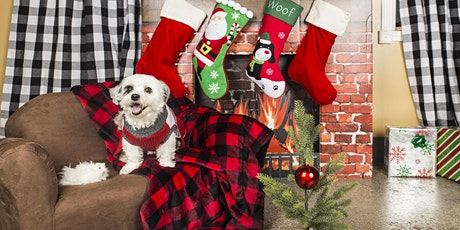 Dogs Only Howliday Mini Sessions tickets