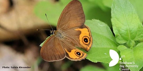 Planting for butterflies with Helen Schwencke tickets