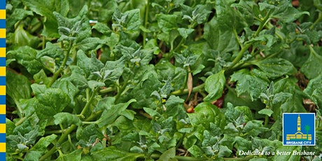 Grow your own bush foods workshop tickets
