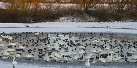 Winter Wader Walk. tickets