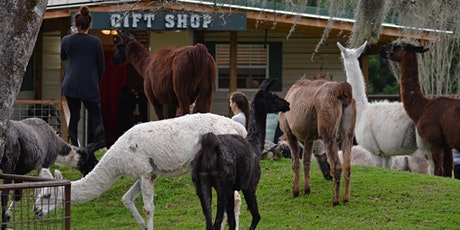 Yoga with Llamas and Wine Social! tickets