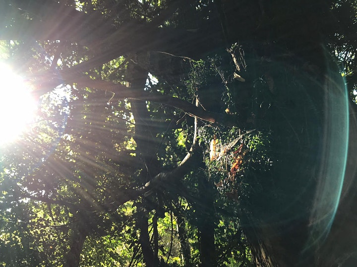 Forest bathing ~ Peace in the Pells of Lewes image