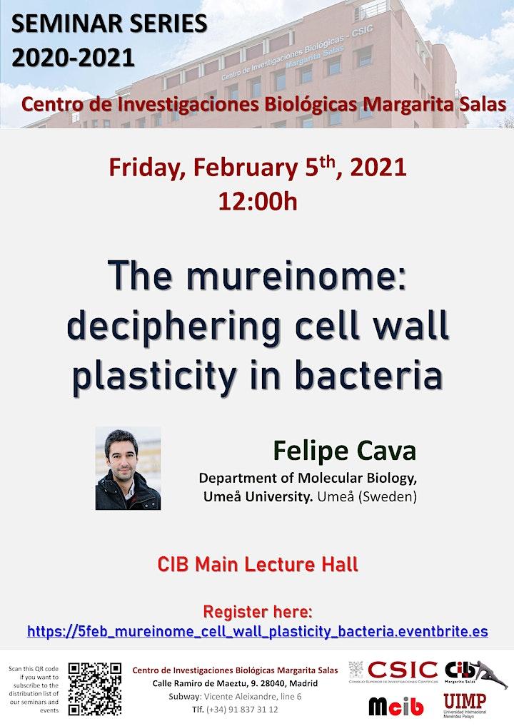 Imagen de The mureinome:  deciphering cell wall plasticity in bacteria