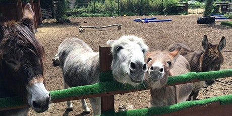 Spitalfields City Farm half term re-opening! tickets