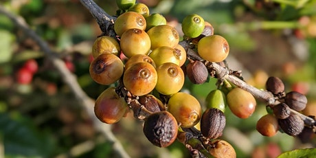 Brewpoint's Farm to Cup Coffee Series: Ethiopian Coffee tickets