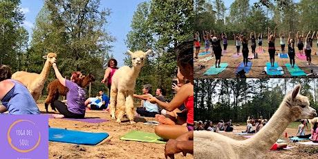 Alpaca Haven Yoga tickets