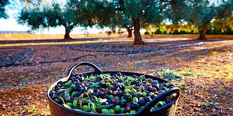 Olive Oil Harvesting Experience tickets