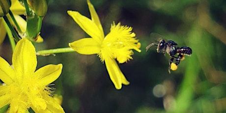 NaturallyGC Wild Pollinator Count tickets