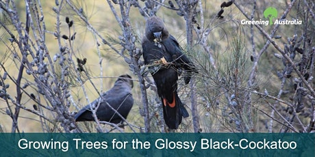 Greening Australia: Growing Trees for the Glossy Black-Cockatoo tickets