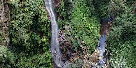 Sunday November 1 8am Coomera Falls walk and lunch at 1230pm Lamington Tea tickets
