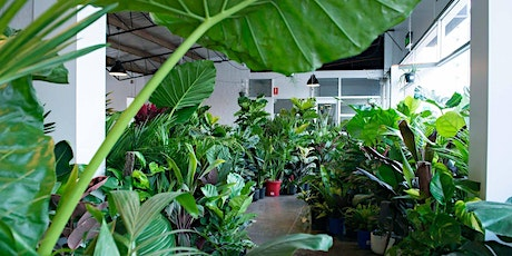 Newcastle - Huge Indoor Plant Sale - Rumble in the Jungle tickets