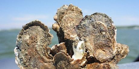Homeschool Event: Mollusks in the Estuary! tickets
