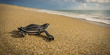 Evenings at the Homestead: Monitoring Endangered Leatherback Sea Turtles tickets