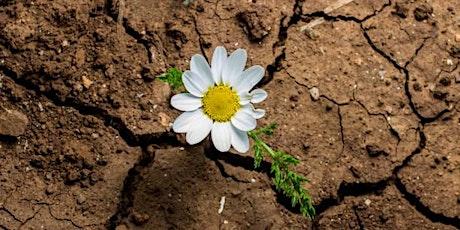 Taller de Resiliencia entradas