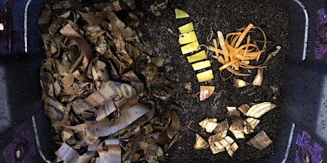 Worm Composting 101: Building and Maintaining a Worm Bin - Virtual Class tickets