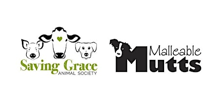 Mature Dog Pack Walk (1 year and older) tickets
