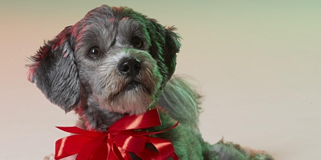 Pet Furtography at Chartwell - Small Animals tickets