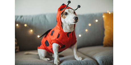 PET HALLOWEEN - RSPCA CUP CAKE DAY!! tickets
