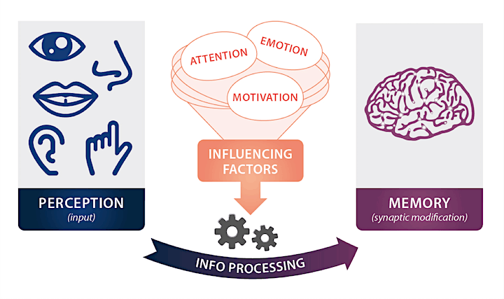 Game UX Masterclass - Part 1/3: The Brain (Cognitive Science) image