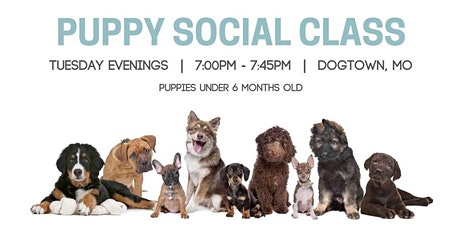 Weekly Puppy Social Class tickets