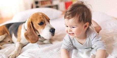 Mascotas en casa entradas