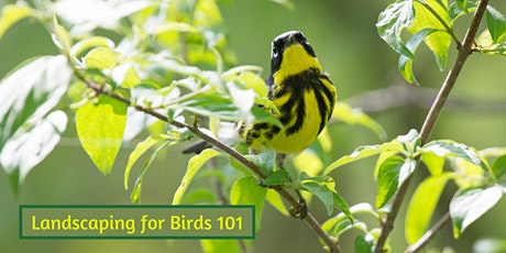 Landscaping for Birds 101 tickets