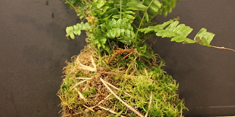 Kokedama workshop - the art of mossballs tickets
