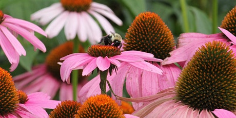 Gardening the Mountains Series: Native Plants tickets