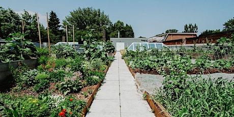 Avling Kitchen Herb Garden Workshop tickets