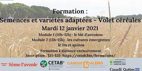 Formation sur les semences et variétés adaptées : module céréales billets