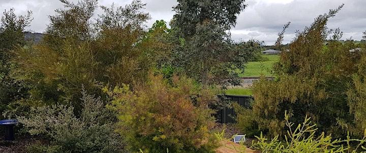 Bungendore Open Gardens 2020 image